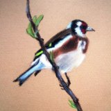 Goldfinch (Sold)