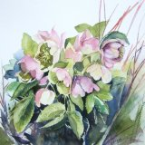 Early Hellebore (sold)