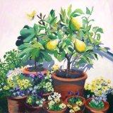 Lemon Tree (sold)