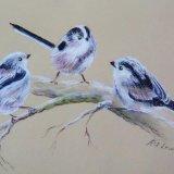 Long tailed trio