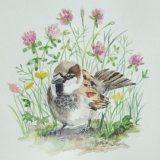 Sparrow and wild flowers