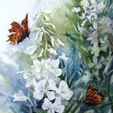 White Willow Herb & Butterflies