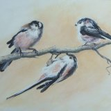 Long Tailed Tits (print)