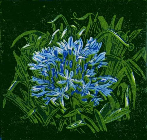 Janet Waters:<br><I>Agapanthus (Blue)</I>
