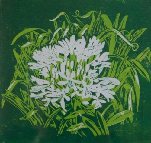 Janet Waters:<br><I>Agapanthus (White)</I>