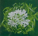 Janet Waters:Agapanthus (White)