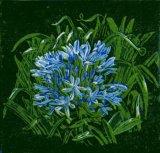 Janet Waters:Agapanthus (Blue)