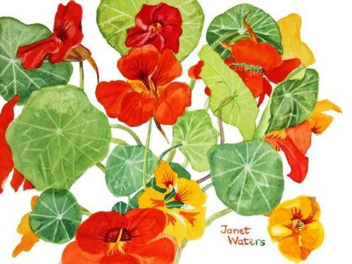 Janet Waters:<br><I>Nasturtiums</I>