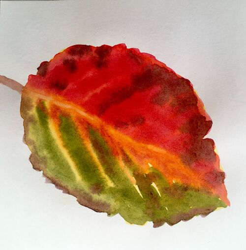 Janet Waters - Autumn Leaf Study 1