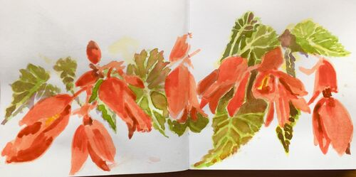 Janet Waters - In my garden - Trailing Begonia