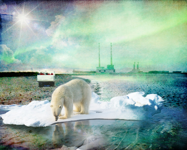 A Plea for The Animals The Arctic