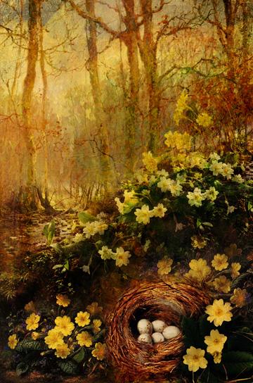 The Secret Language of Flowers:Primrose/ Ryland Peters & Small