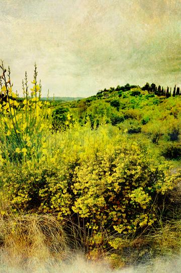 The Secret Language of Herbs:Broom/Ryland Peters & Small