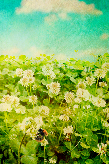 The Secret Language of Herbs:Clover/Ryland Peters & Small