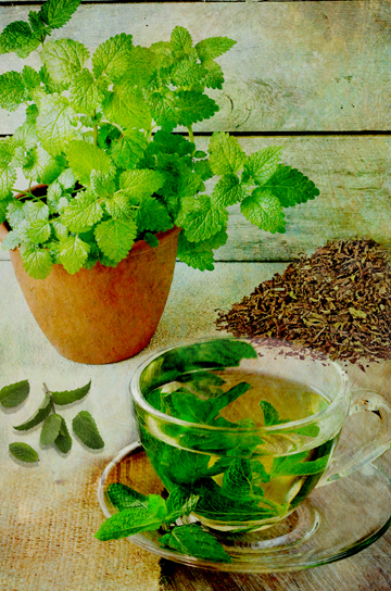 The Secret Language of Herbs:Mint/Ryland Peters & Small
