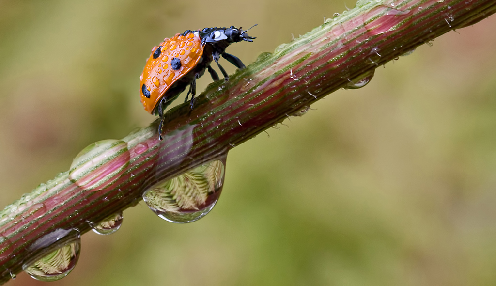 Ladybird  and Ferns