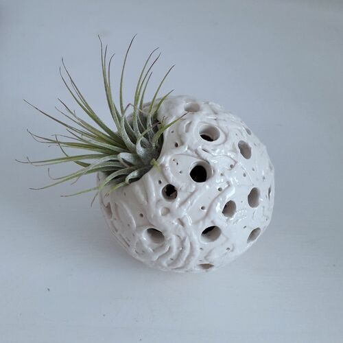 NEW White Earthenware with Tillandsia air plant