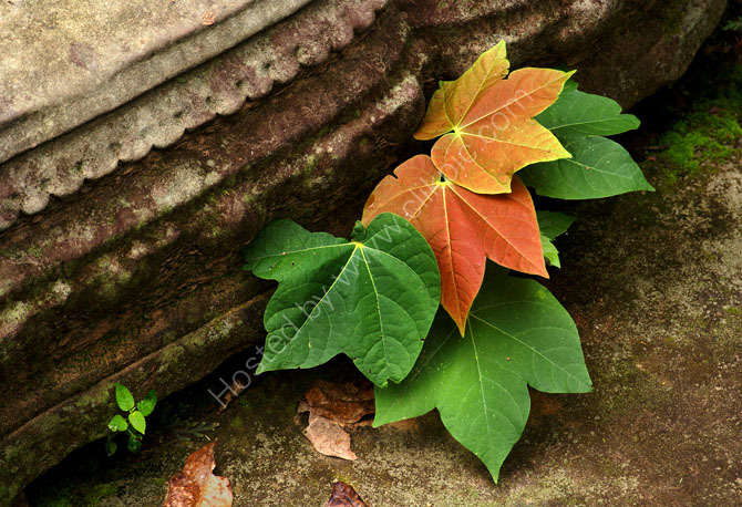 Step and Leaves