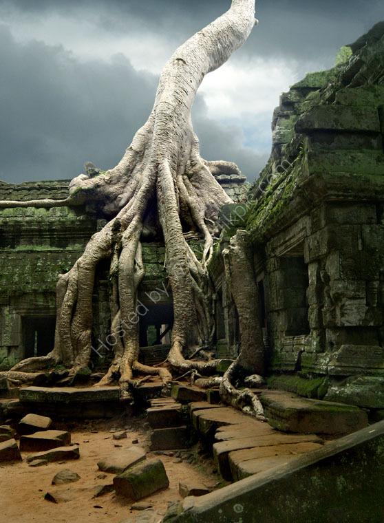 Silk-Cotton Tree, Ta Phrom