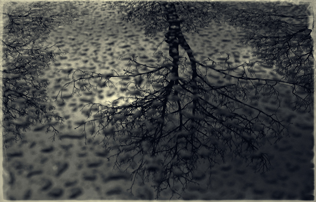 Reflections of trees in the rain