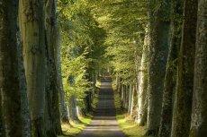 Beech Lined Avenue