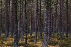 Meikleour Woods