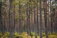 Meikleour Woods II