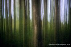 Perthshire Woodland Blur