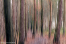Pentland Woodland Blur II