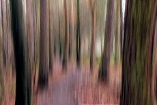 Pentland Woodland Blur III
