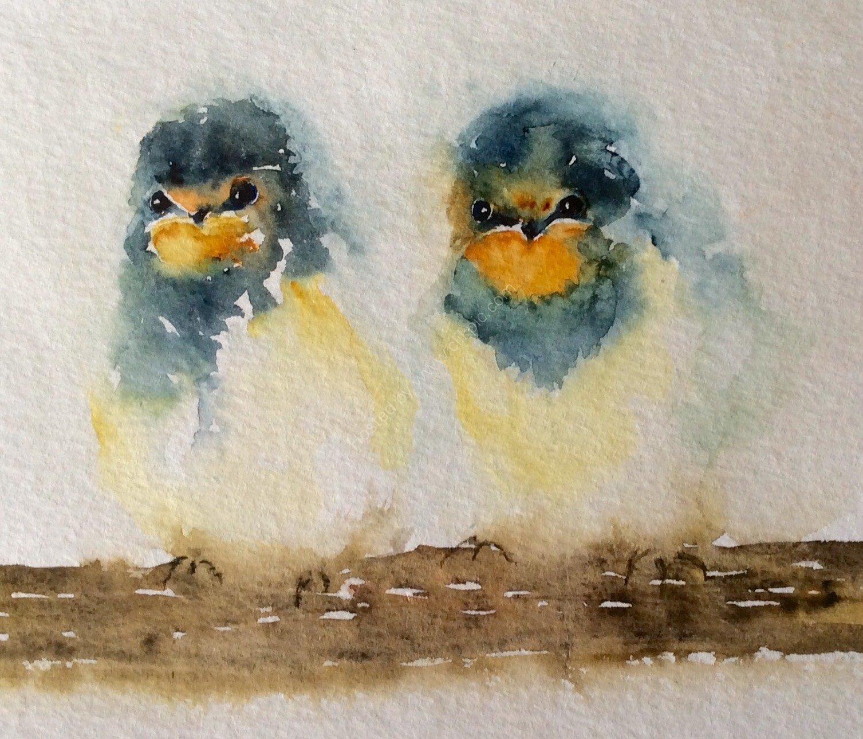 Swallow Fledglings