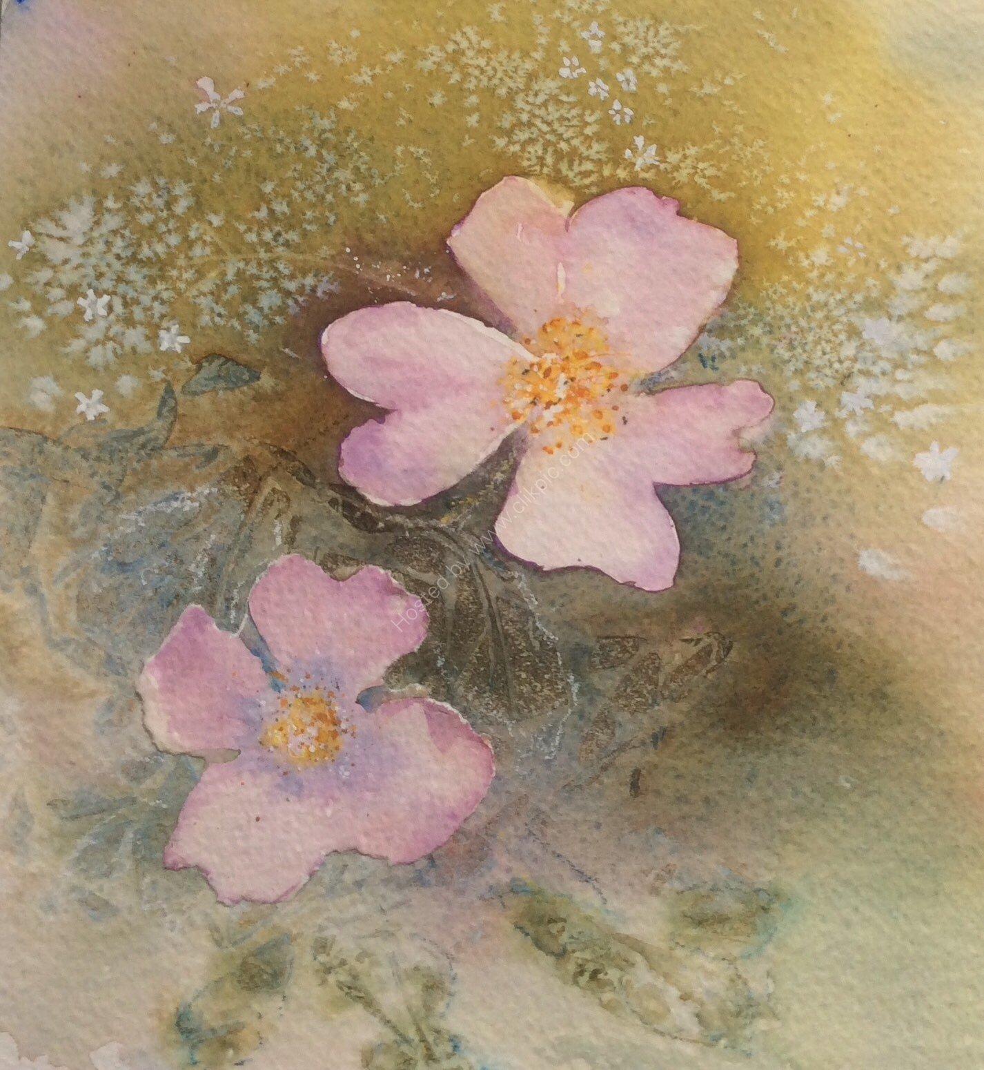 Sweet Briar Roses