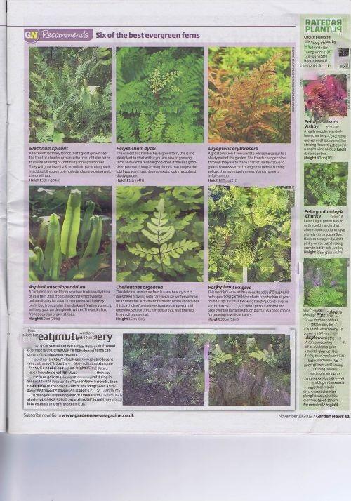 Garden news 2