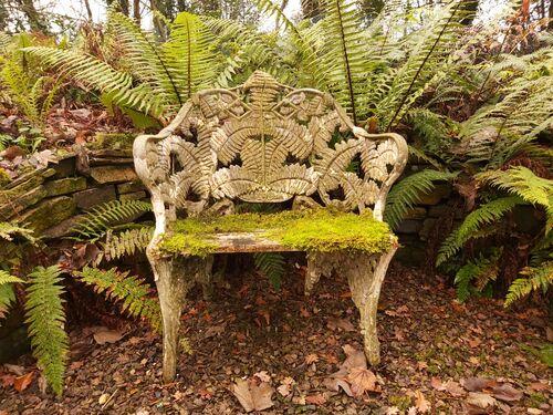 Stumpery Fern Collection. 7 ferns €27.00