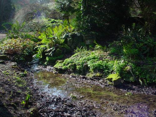 Bog garden collection- 7 ferns- £26.00