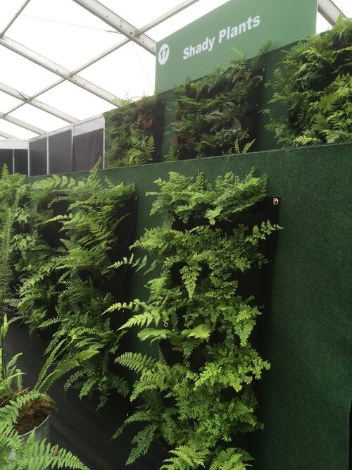 9 mixed ferns for living wall €35