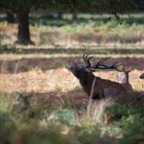 602-Red Deer