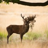 605-Red Deer
