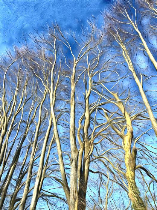 Winter trees, Shipton