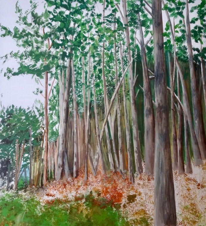 Woods near Holkham