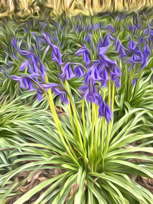Bluebells in Suffolk