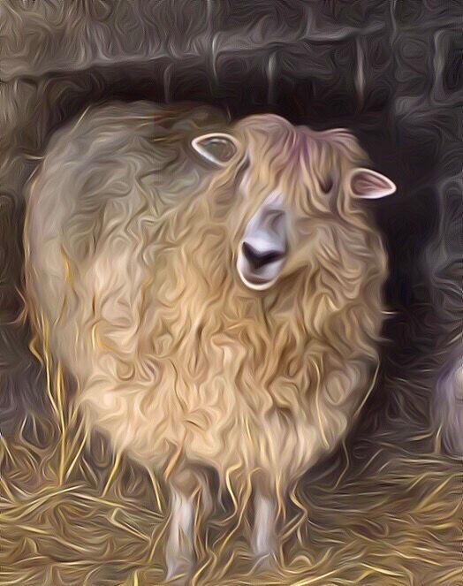 Sheep too