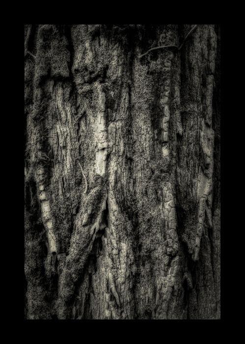 La Forêt Intime