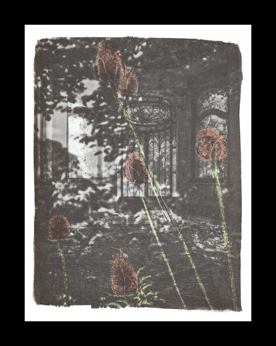 Platine / palladium print hand-coloured