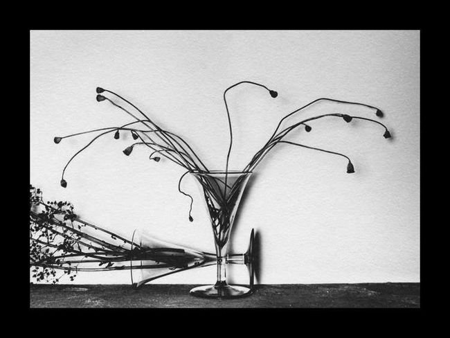 Poppy Seed heads, Ilford Art 300, Selenium (24x30)
