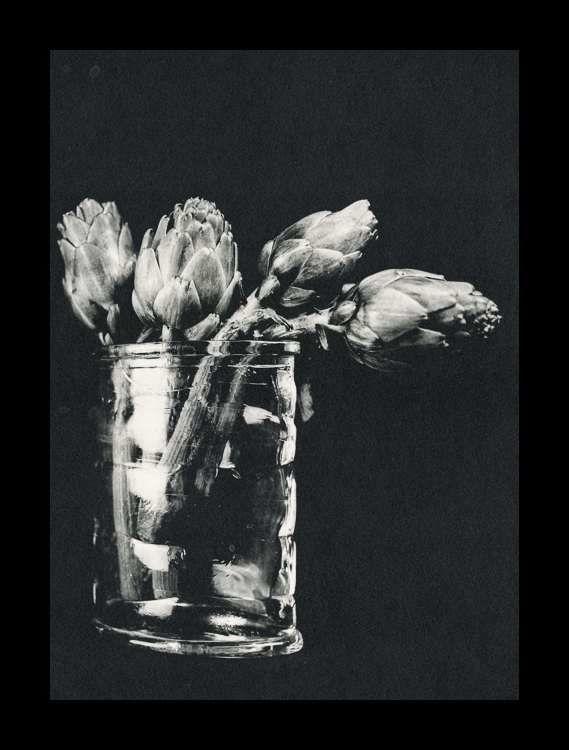 Artichokes, Ilford Art 300, Selenium (24x30)