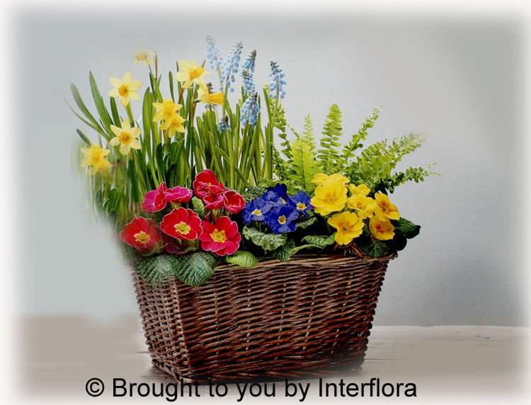 Bold Brights Planted Basket £30