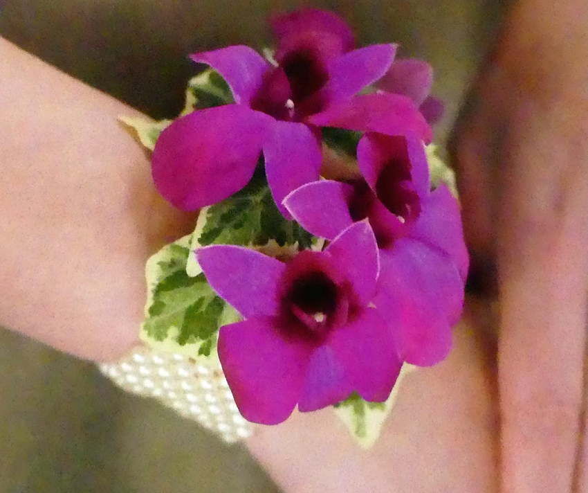 Dendrobium Orchid/Pearl Wrist Corsage