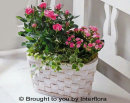 Pink Rose & Kalanchoe Basket: £35.00
