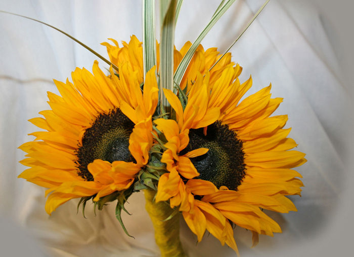 Sunflower Handtied